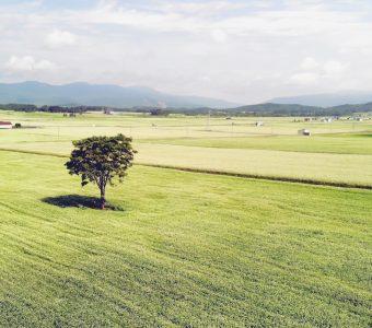 1本木の木
