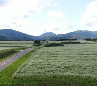 畑と1本道
