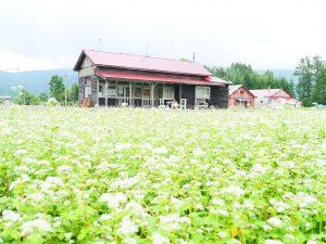 幌加内 沼牛駅と蕎麦畑