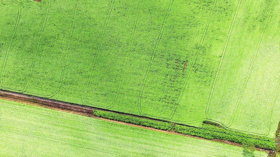 新緑のそば畑01-M